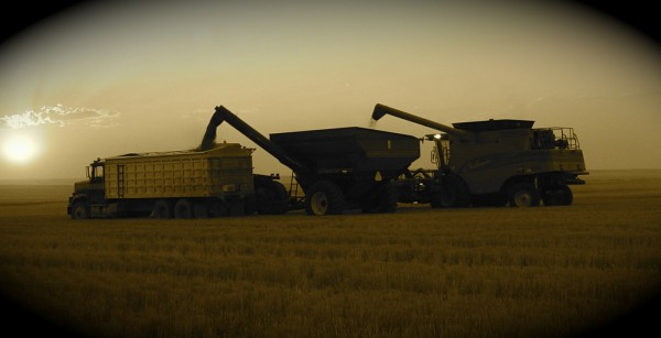Fales, roping, harvest 04 036